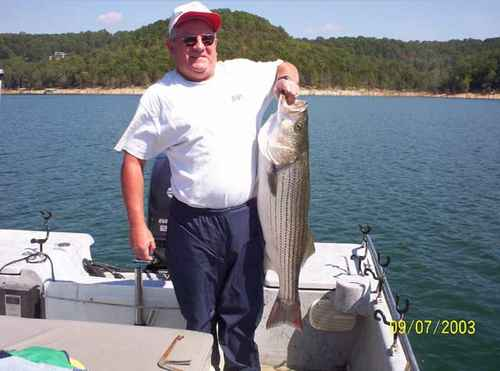 Nice Fish -- Striped Bass