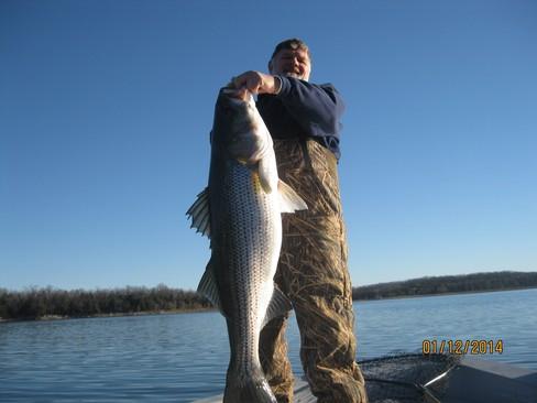 Beaver lake striped bass fishing report 01 12 2014 for Beaver lake arkansas fishing report