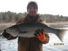 (03/07/2014) - Nice Striped Bass