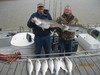 (03/31/2014) - Nice Striped Bass