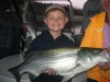 (04/18/2014) - Nice Striped Bass
