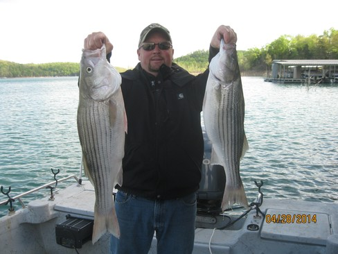 Beaver lake striped bass fishing report 04 28 2014 for Beaver lake striper fishing