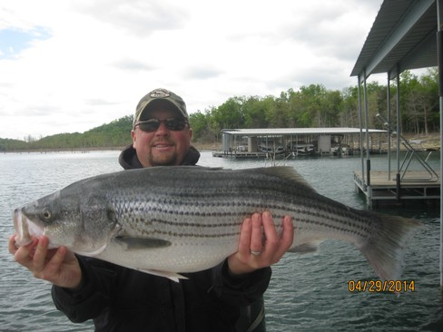 Beaver lake striped bass fishing report 04 29 2014 for Beaver lake striper fishing
