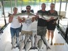 (06/21/2016) - Nice Striped Bass