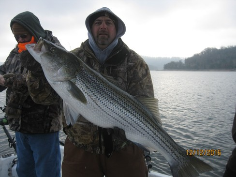 Beaver lake striped bass fishing report 12 12 2016 for Beaver lake striper fishing