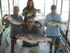 (07/04/2014) - Nice Striped Bass
