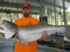 (07/12/2014) - Nice Striped Bass