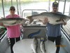 (07/19/2014) - Nice Striped Bass