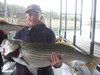 (10/12/2014) - Nice Striped Bass