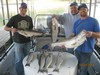 (10/24/2014) - Nice Striped Bass