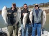 (03/26/2019) - Nice Striped Bass