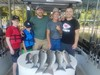(08/04/2019) - Nice Striped Bass
