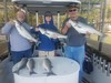 (04/26/2020) - Nice Striped Bass