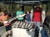 (07/08/2020) - Nice Striped Bass