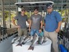 (07/15/2020) - Nice Striped Bass