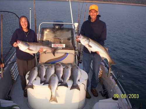 Nice limit of Striped Bass