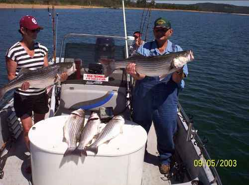 These could be your Stripers