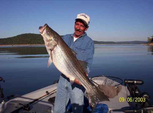 Now that is a Hog Striper