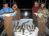 (11/30/2013) - Nice Striped Bass