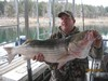 (12/01/2013) - Nice Striped Bass