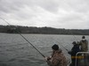 (12/19/2013) - Nice Striped Bass