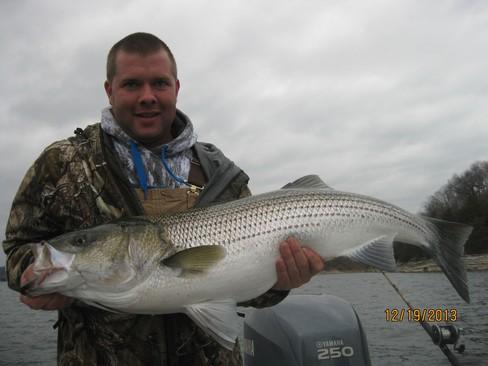 Beaver lake striped bass fishing report 12 19 2013 for Striped bass fishing reports