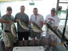 (05/17/2013) - Nice Striped Bass