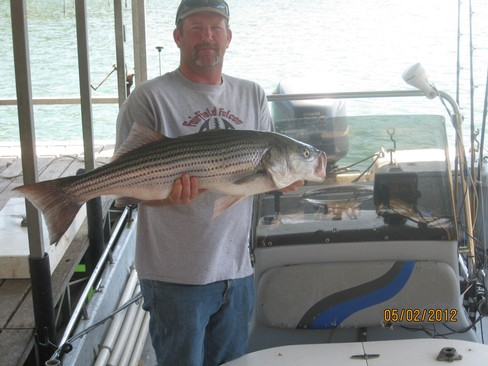 Beaver lake striped bass fishing report 05 02 2012 for Beaver lake striper fishing