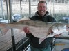 (02/03/2013) - Nice Striped Bass