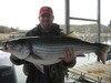 (04/14/2013) - Nice Striped Bass