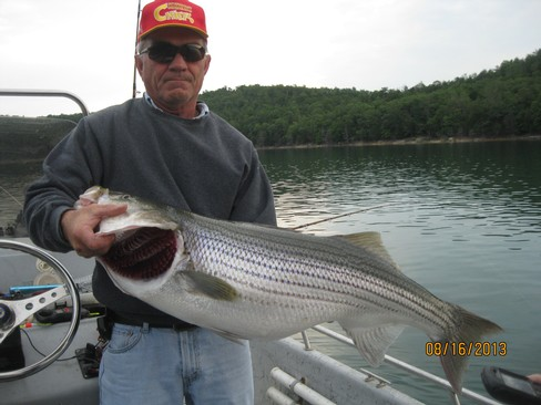 Beaver lake striped bass fishing report 08 16 2013 for Beaver lake striper fishing
