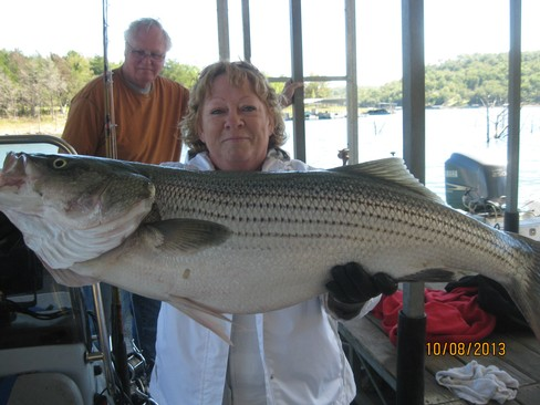 Beaver lake striped bass fishing report 10 08 2013 for Beaver lake striper fishing