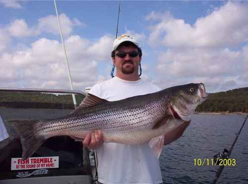 This could be your Striper