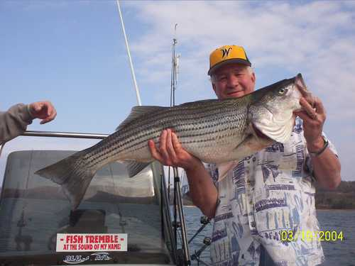 Nice Striped Bass