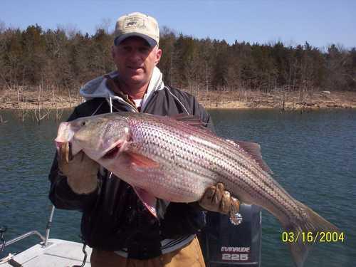 Nice Striped Bass