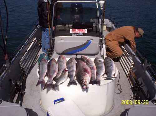 Yet another limit of stripers