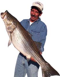 Large Catch - Striper Fishing